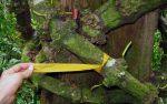 Cao Gắm – lựa chọn từ thiên nhiên cho người bệnh Gút