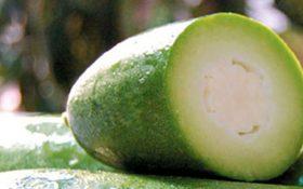 Lợi ích tuyệt vời của quả bí xanh đối với bệnh gout